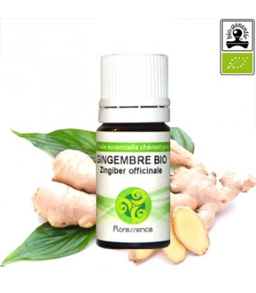 Gingembre (Zingiber Officinale) BIO